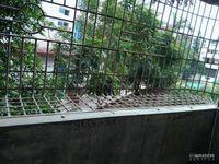 出租园亭路花园3室2厅1卫139平米950元/月住宅